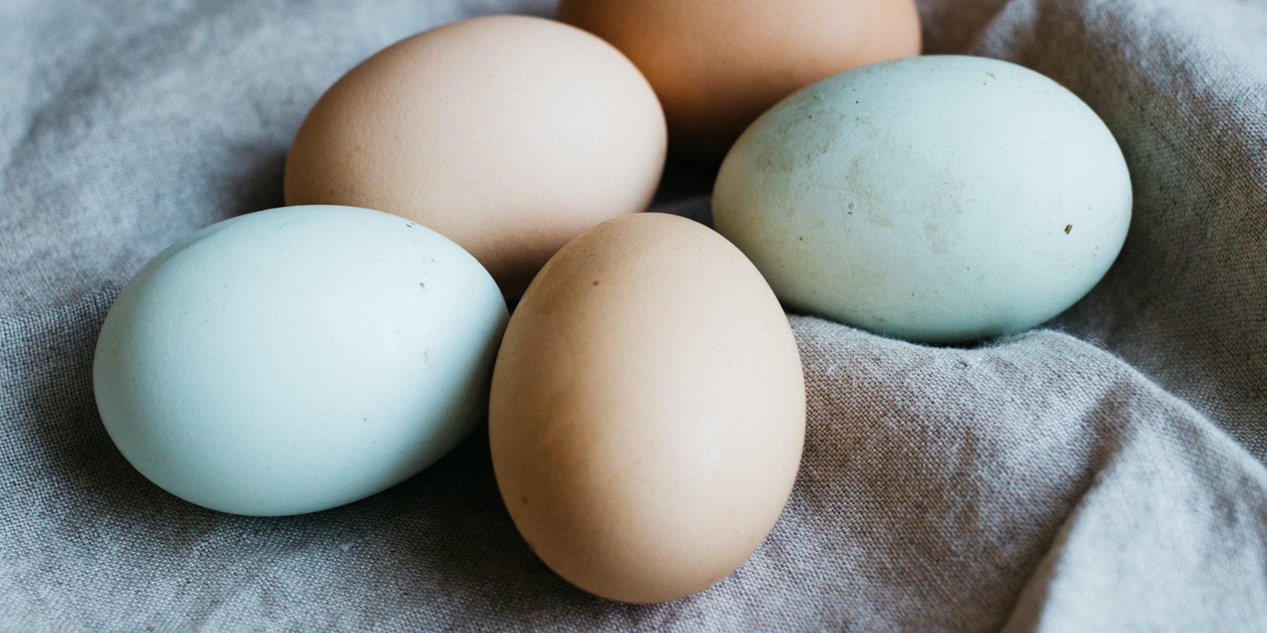 buy local eggs